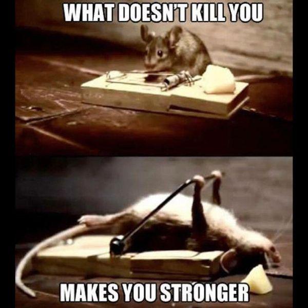 16-What-Does-Not-Kill-You-Motivational-Meme.jpg