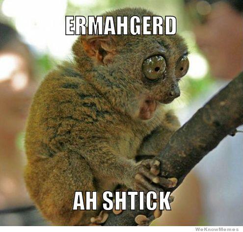Animal Funny Memes.jpg