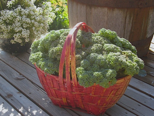 broccoli in basket.jpg