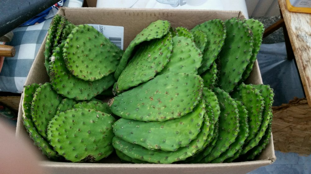 cactus pads.jpg