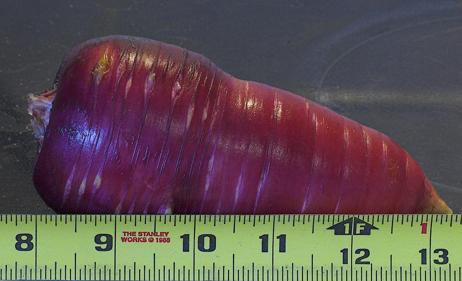 Carrot_YA271169_10-27-2009-001.jpg