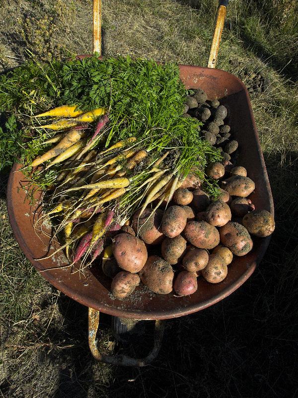 Carrots_potatoes_PA094265_10-09-2007-001.jpg
