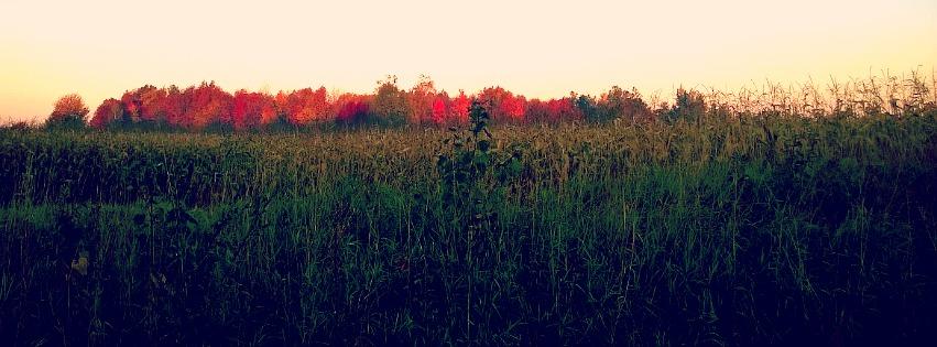 Fall Image.jpg