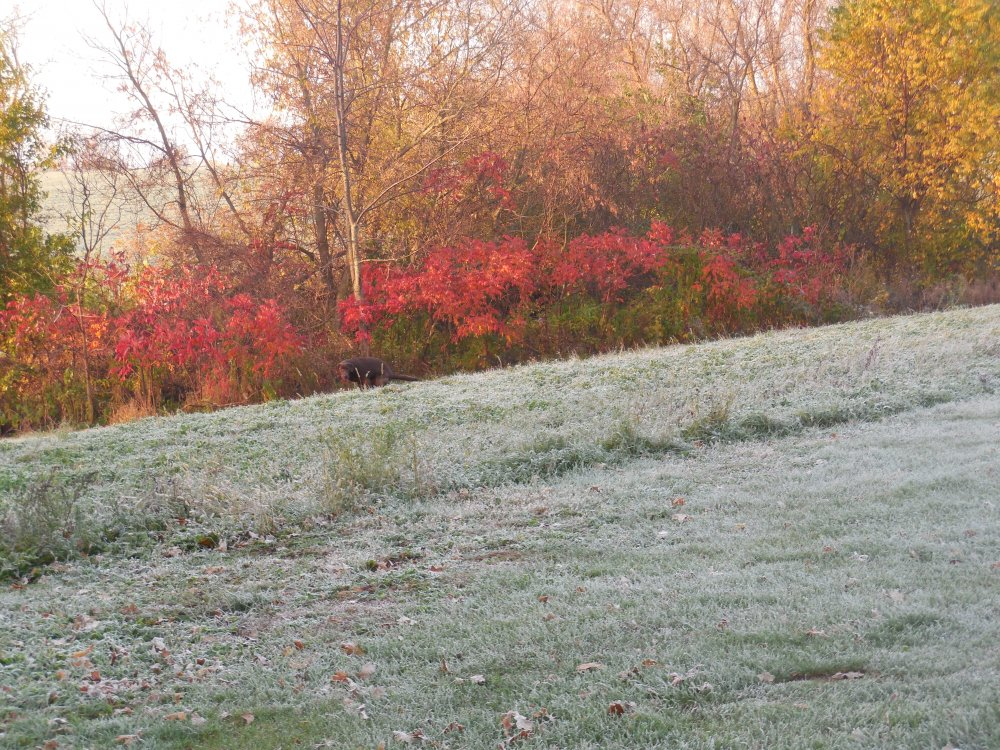 Fire on the frost.JPG