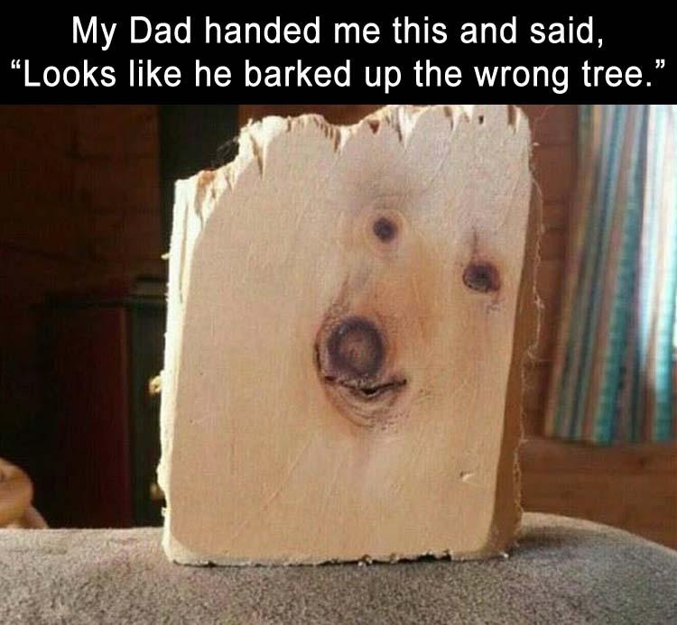 looks_like_he_barked_up_the_wrong_tree._3759794388.jpg