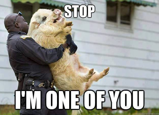 Stop-I-Am-one-Of-You-Funny-Animal-Pig-Meme-Picture.jpeg