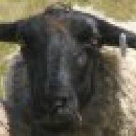 The Old Ram-Australia